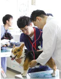 日本大学動物病院が週刊東洋経済「プロが本当に信頼する動物病院」ランキングでトップに選ばれました
