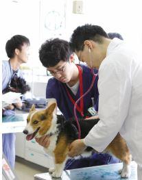 獣医学科 浅野和之 教授が読売新聞(4月26日朝刊)「研究最前線」で紹介されました