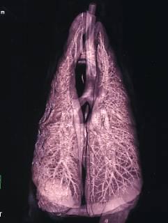 獣医麻酔・呼吸器学研究室