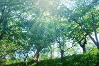 森林資源科学科 木口 実 教授が,第1回日本木材保存協会功績賞を受賞しました
