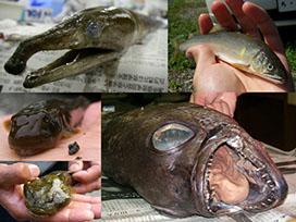 魚類生態学