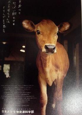 「APAアワード2016」(広告作品部門)受賞!!