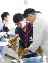 最新鋭の設備を完備した動物病院