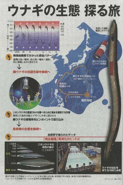 朝日新聞にウナギ学研究室 塚本 教授(海洋生物資源科学科)らの記事が掲載されました(3月26日朝刊)