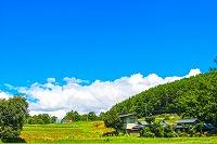 生命農学科3年 神田あかり さんが総務大臣と会談されました!