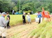 農作業体験実習(稲刈り)