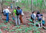 ブナ林内のキノコ調査
