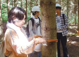 八雲演習林(北海道)