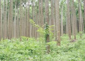 君津演習林(千葉県)