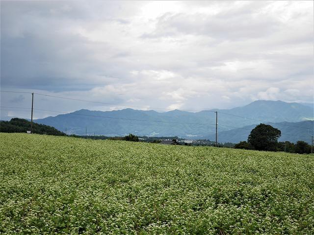 食品ビジネス学科の学生が,長野県飯島産そば粉を活用したアイディアレシピを考案しました!