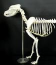 獣医解剖学研究室