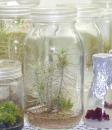 植物細胞学研究室