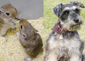 伴侶動物学