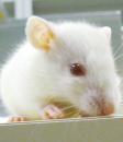動物組織機能学研究室