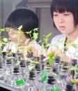 植物栄養生理学研究室