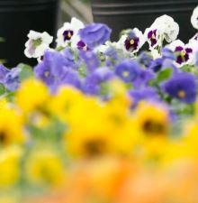 生命農学科 窪田聡教授らの論文が園芸学会において、園芸学会年間優秀論文賞を受賞しました