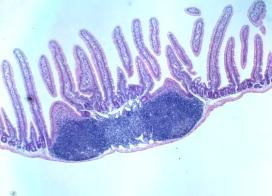 免疫生物学