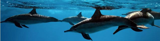 海洋生物資源科学科