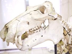 クジラの骨からミツバチまで、さまざまな資料を紹介