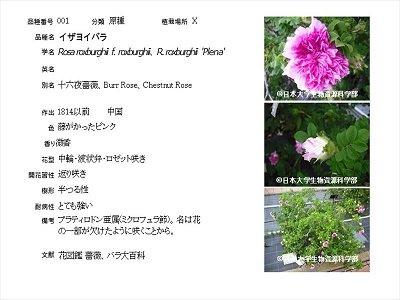 バラ園にあるバラ品種紹介